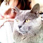 Bon dimanche!!nothingsordinary bluecat cats catoftheday catstagram chartreuxofinstagram chartreuxlove mycatgallery cathellip