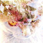 Bon lundi  tous! cat catoftheday catsofinstagram chartreux chartreuxlove chartreuxfanhellip